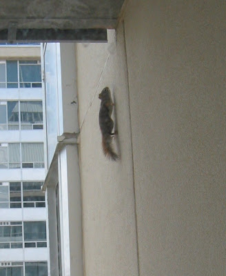 squirrel spider! Spiderman Squirrel! Squirrel Spider! Squirrel Spiderman