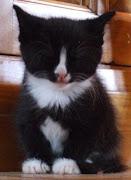 My Figaro