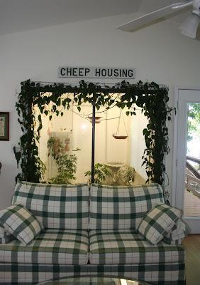 gouldian finch indoor aviary