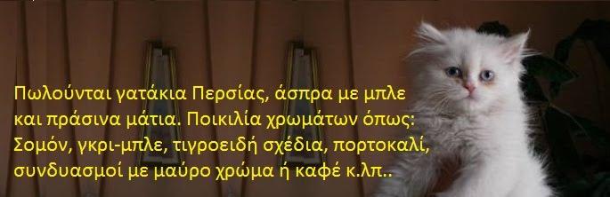 ΓΑΤΕΣ ΠΕΡΣΙΑΣ gates persias  γατες περσιας
