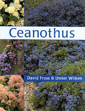 Ceanothus