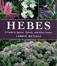 Hebes