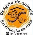 Augusto Abrigo