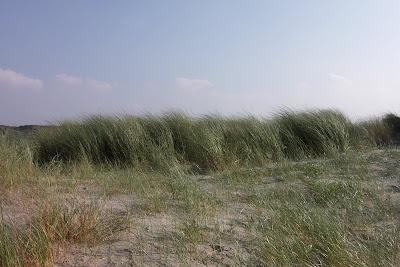 Dunes IJmuiden