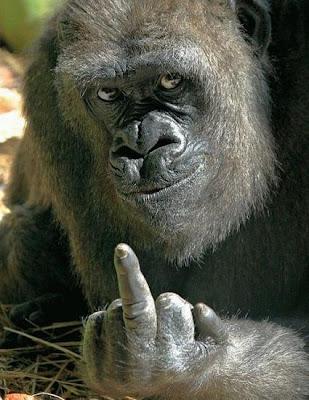 Gorilas... los de antes...