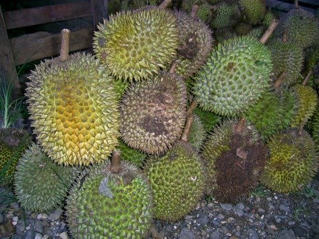 [durian]