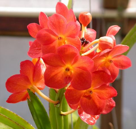 Welcome to august 2010 - Vanda orchid care ...