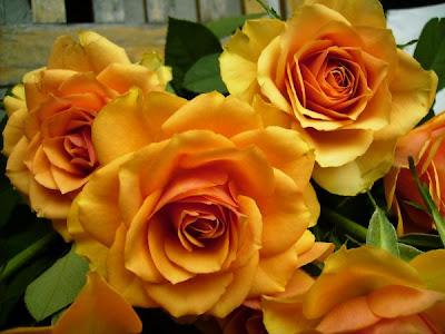 willkommen in renates eckchen meine rosen auf einer alten bank. Black Bedroom Furniture Sets. Home Design Ideas