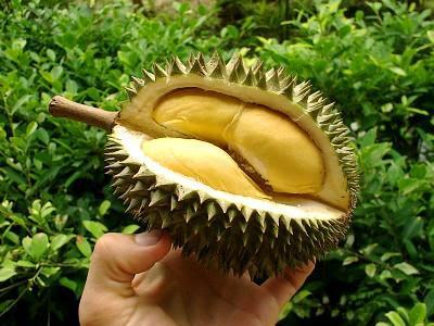 101 Preguntas y Respuestas Curiosas Durian+Fruit