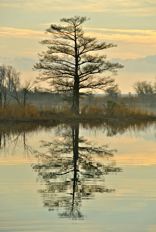 nc river reflections