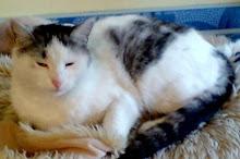 Nasza kociczka Mrunelda Szakira