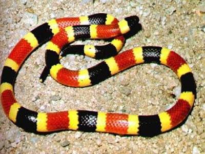 Snake Wallpapers