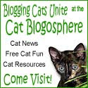Fellow Feline Bloggers!