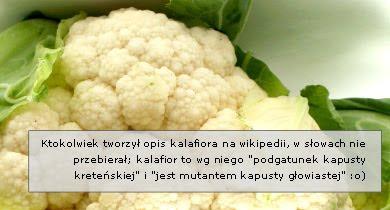 Kalafior: opis, pochodzenie, odmiany...