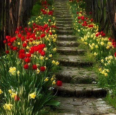 http://3.bp.blogspot.com/_2AD9JvkSp3M/SAPEe1_ObjI/AAAAAAAAAR8/A6ePHCjlPvo/S1600-R/flores.jpg