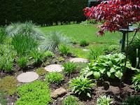 Garden Path Japanese Maple