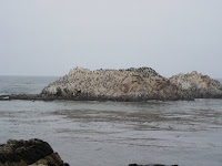 Bird Rock 17 Mile Drive California