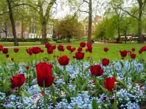 My addiction jard n de rosas - Un jardin para mi ...