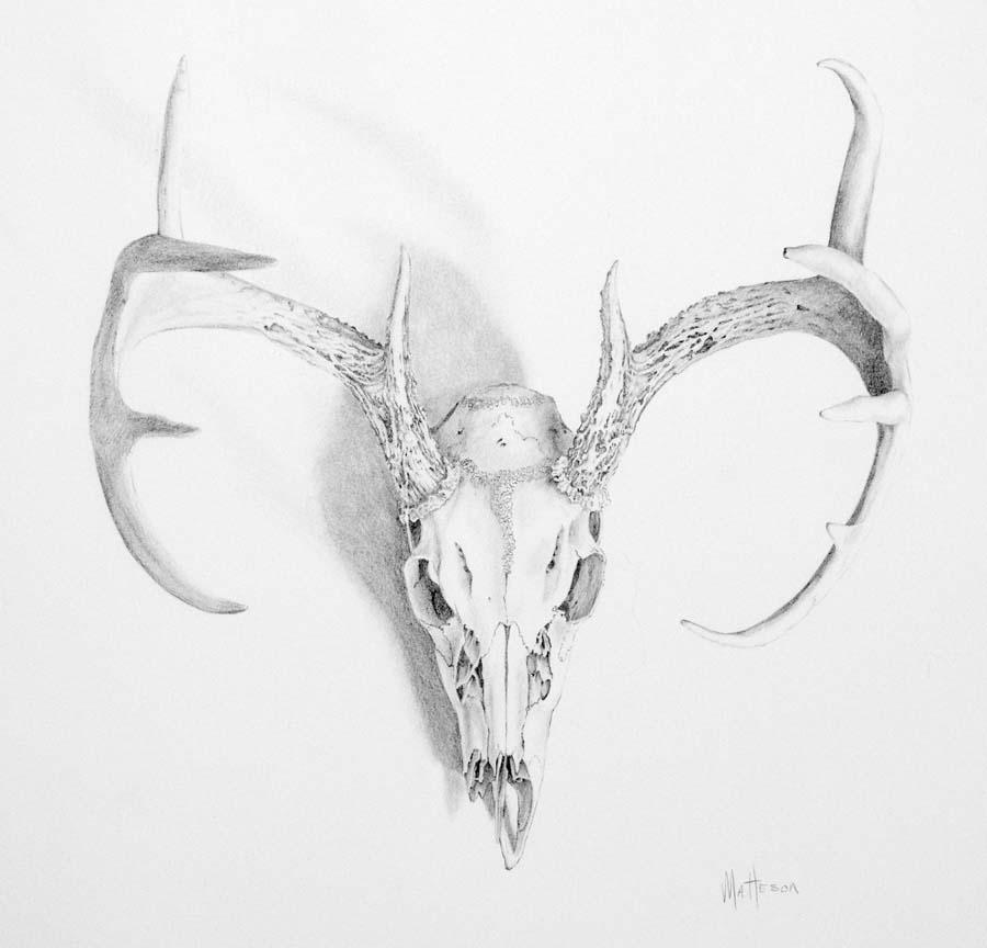 Deer Skull Drawings