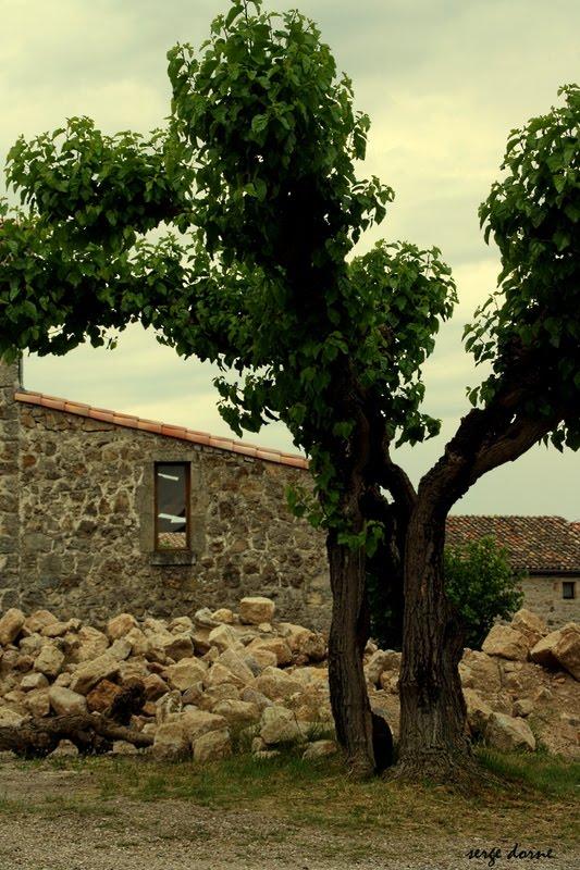 nature en ligne le photoblog de serge un arbre toujours vivant. Black Bedroom Furniture Sets. Home Design Ideas