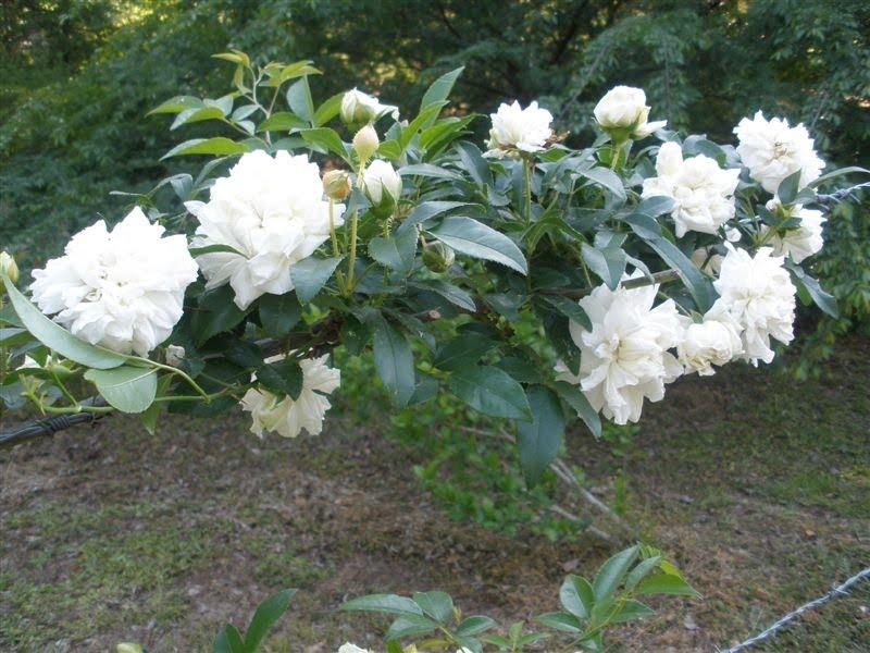 http://3.bp.blogspot.com/_2G0_N-YZq2w/S8_BSyISR3I/AAAAAAAAALI/GMbvqaJrjlY/s1600/P4210003+Jeanne+d%27Arc.JPG
