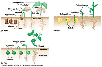 Tumbuh dan berkembang ciri makhluk hidup1