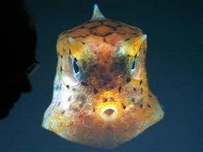 Sea Creature?