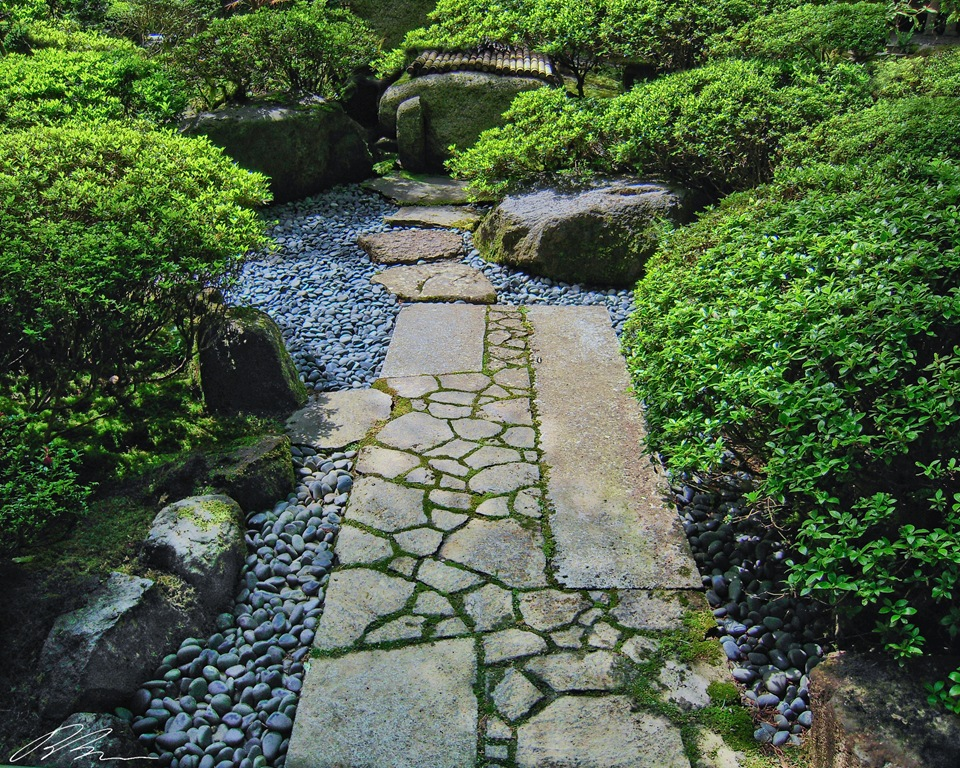 Daisy rooms for Japanese garden plans and plants
