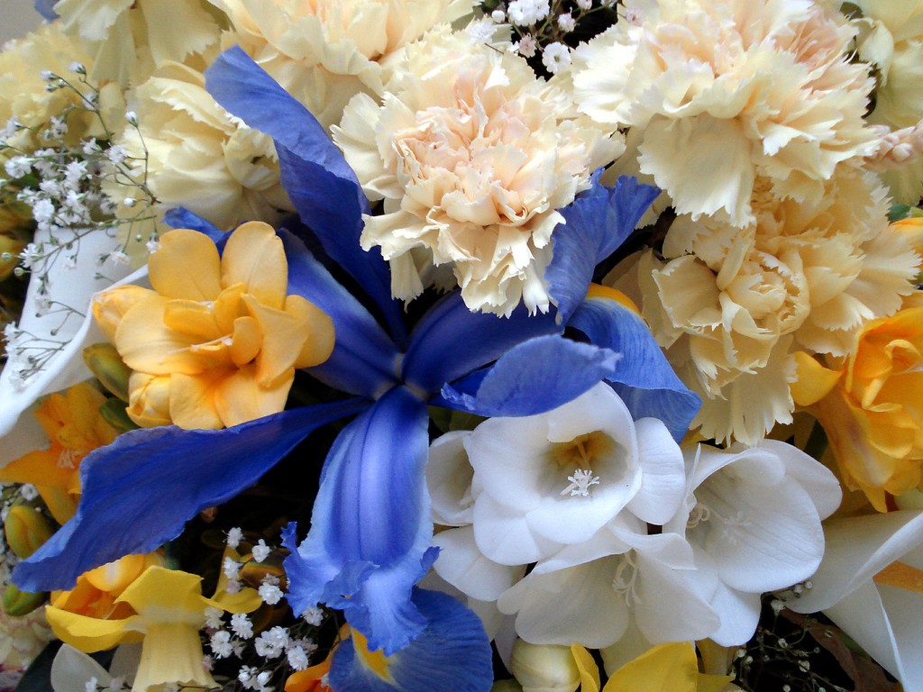 http://3.bp.blogspot.com/_2IU2Nt4rD1k/S7niVDunXGI/AAAAAAAABVY/qe2H4UUBo0c/s1600/Buchete-de-flori-2.jpg