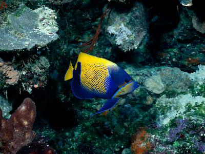 fish tank wallpaper. Fish Tank Backgrounds Free.