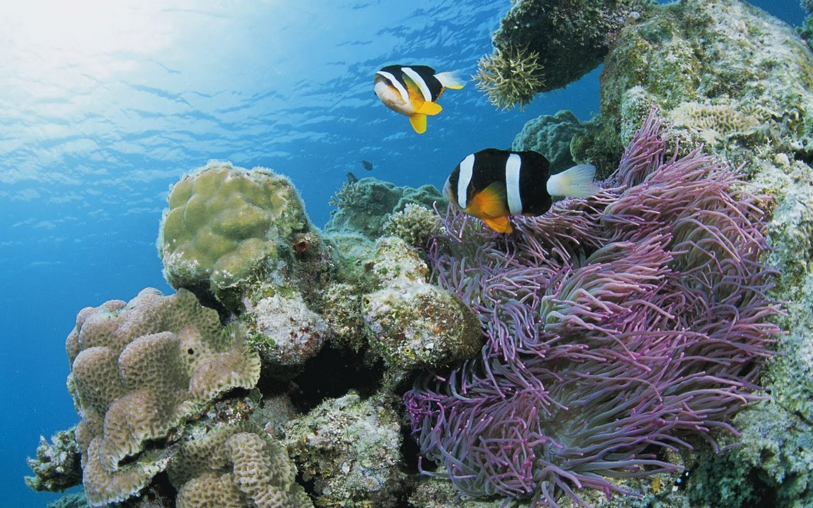 Wallpaper Hd Under Sea