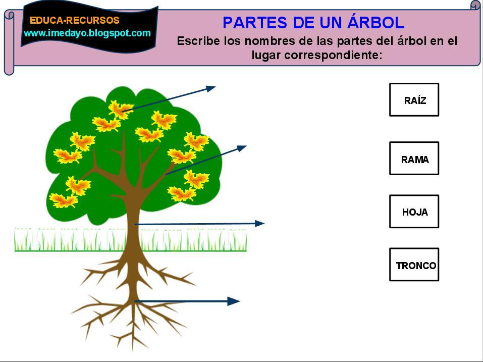 Educa recursos partes del rbol for Un arbol con todas sus partes