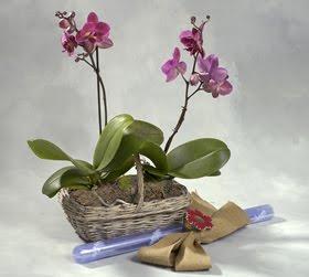 Marzua flores artificiales para decorar - Plantas artificiales para decorar ...