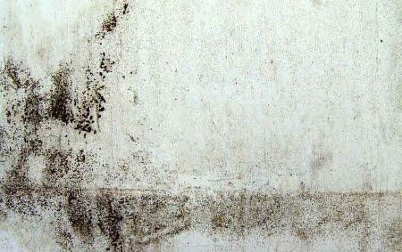Marzua julio 2010 - Manchas de humedad ...