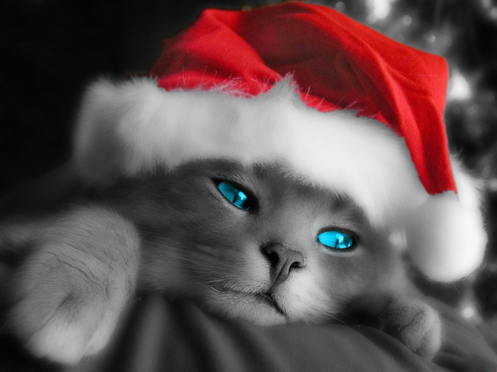 Cute christmas kitten wallpapers free christian wallpapers for Pretty christmas pics