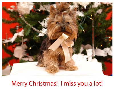 Cute Merry Xmas Puppy