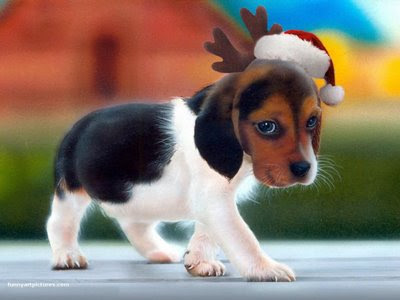 puppies and dogs wallpapers. Christmas Puppies and Dogs