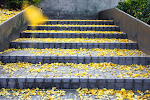 The YeLLoW StaiRs