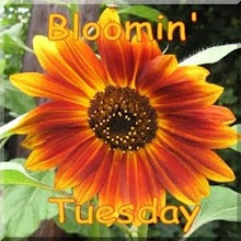 Bloomin Tuesday