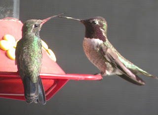 a study on the hook billed hermit hummingbird an endangered specie United states environmental protection agency region 4 345 courtland street, ne atlanta.