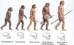 A evolução...