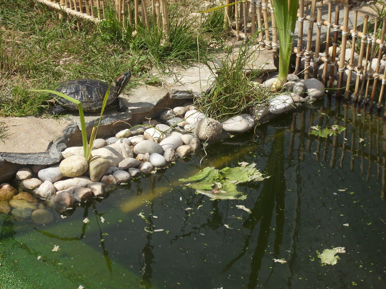 Mis tortugas acu ticas modificaciones for Modificaciones de casas pequenas