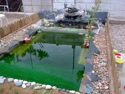 Mis tortugas acu ticas el estanque for Estanque artificial para tortugas