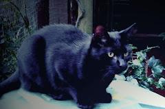 Astro ( -nom, -log...) - najłagodniejszy kot świata...
