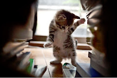 Miau.pl - możesz zaadoptować kotka