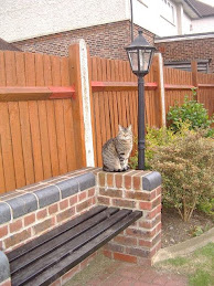 Lamp Post Cat