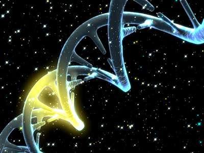 Descubren gen para el tratamiento de la obesidad y diabetes