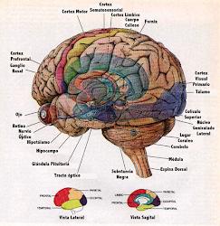 Mais informações sobre neurociencias
