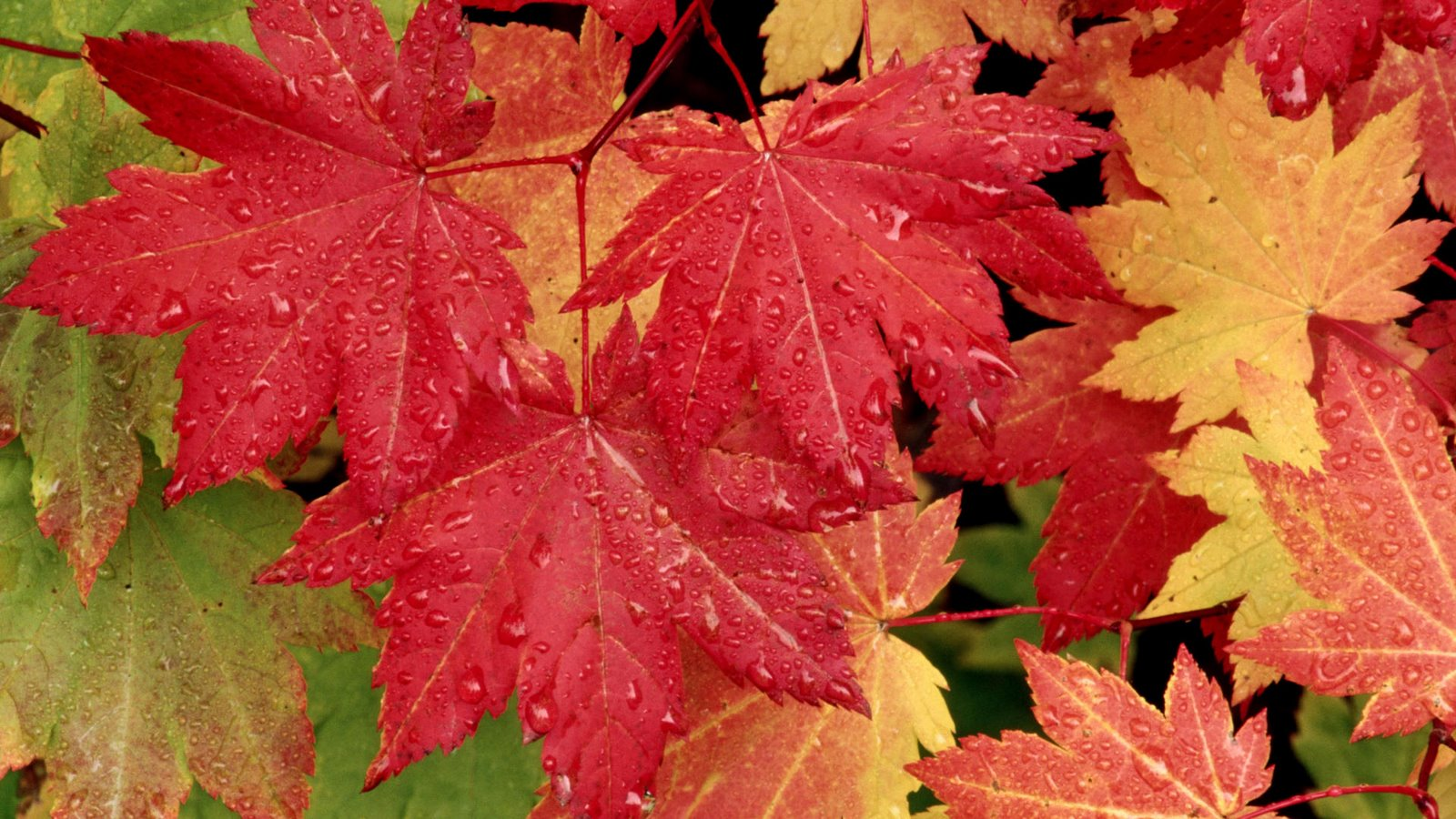 The Best Autumn Fall Red And Yellow Leafs HD Wallpapers