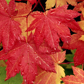 Gambar-gambar daun alami